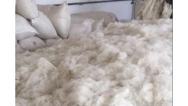 泽库供应各种长短粗细规格的本色山羊绒省时省力-恒瑞绒毛
